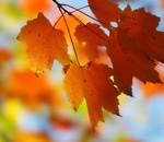 Jesenné prázdniny